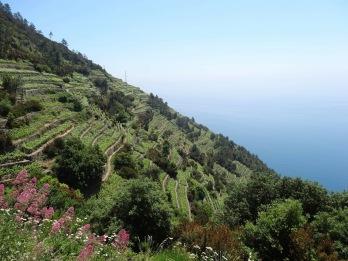Vineyards for days