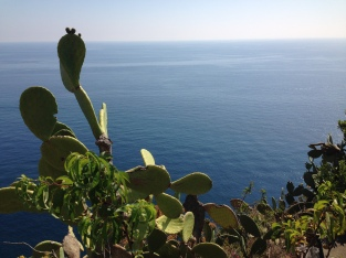 Did you know Italy has cacti?